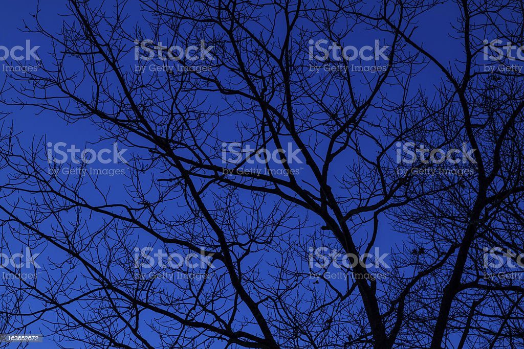 Bare tree and blue sky royalty-free stock photo