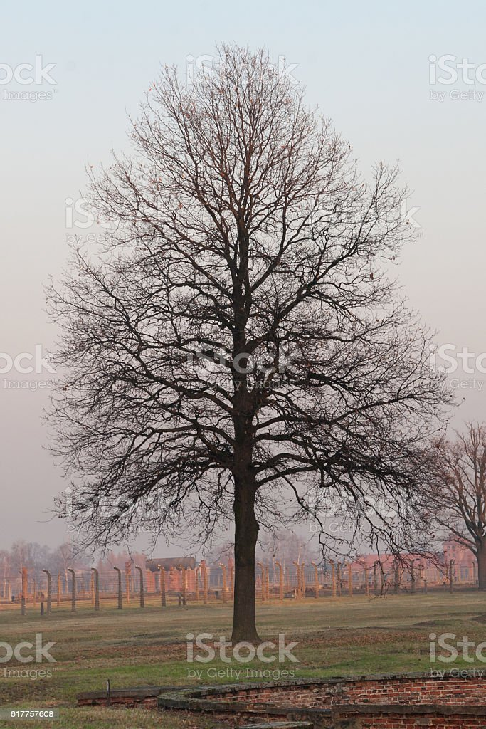 Bare Tree at Birkenau stock photo