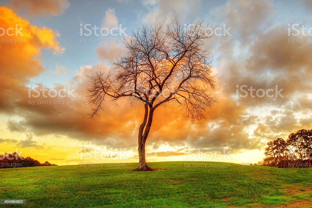 Bare Tree at Sunset stock photo