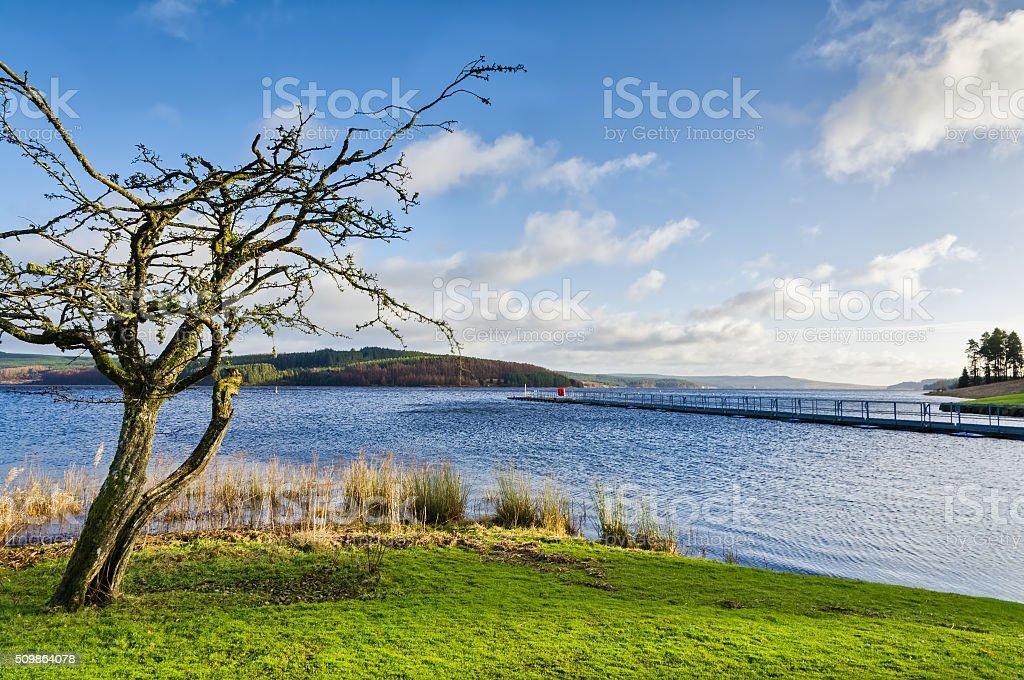 Bare tree beside Keilder Water Reservoir stock photo