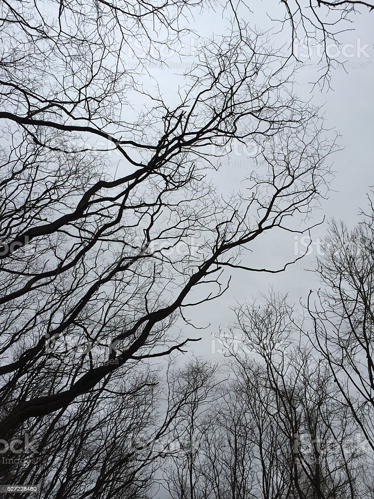 Bare Tree Branches Against an Overcast Sky in the Winter royalty-free stock photo