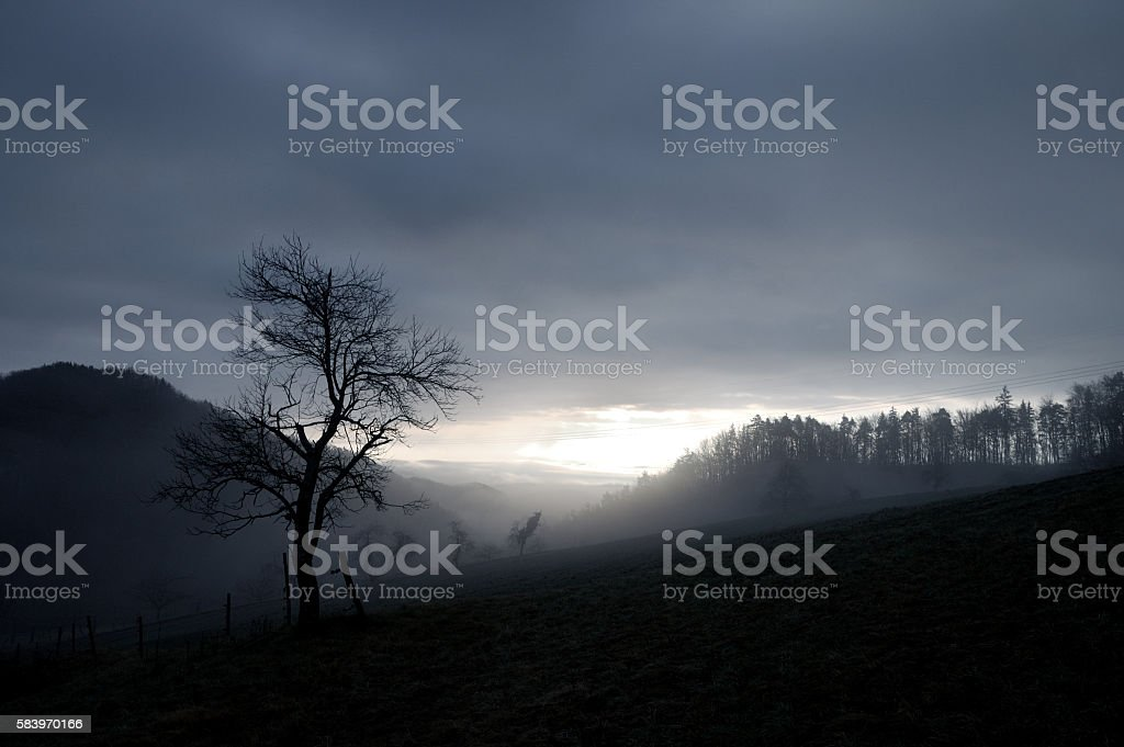 bare tree in a foggy winter morning stock photo