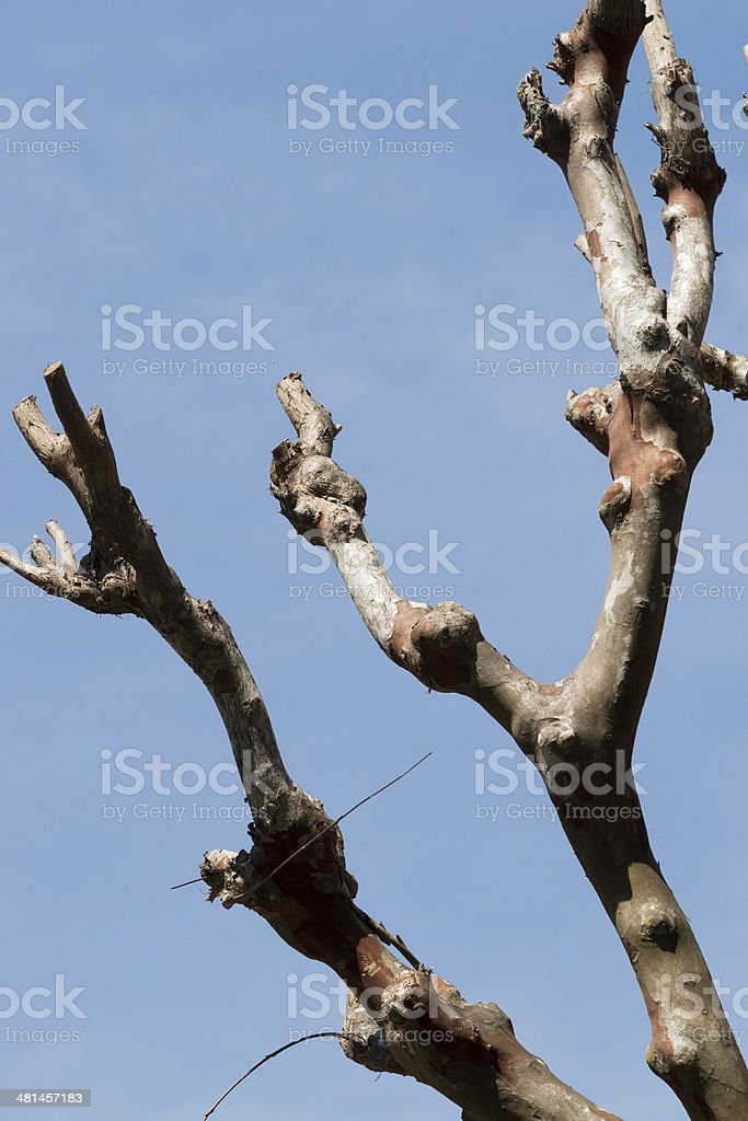bare tree in Savannah, Georgia stock photo