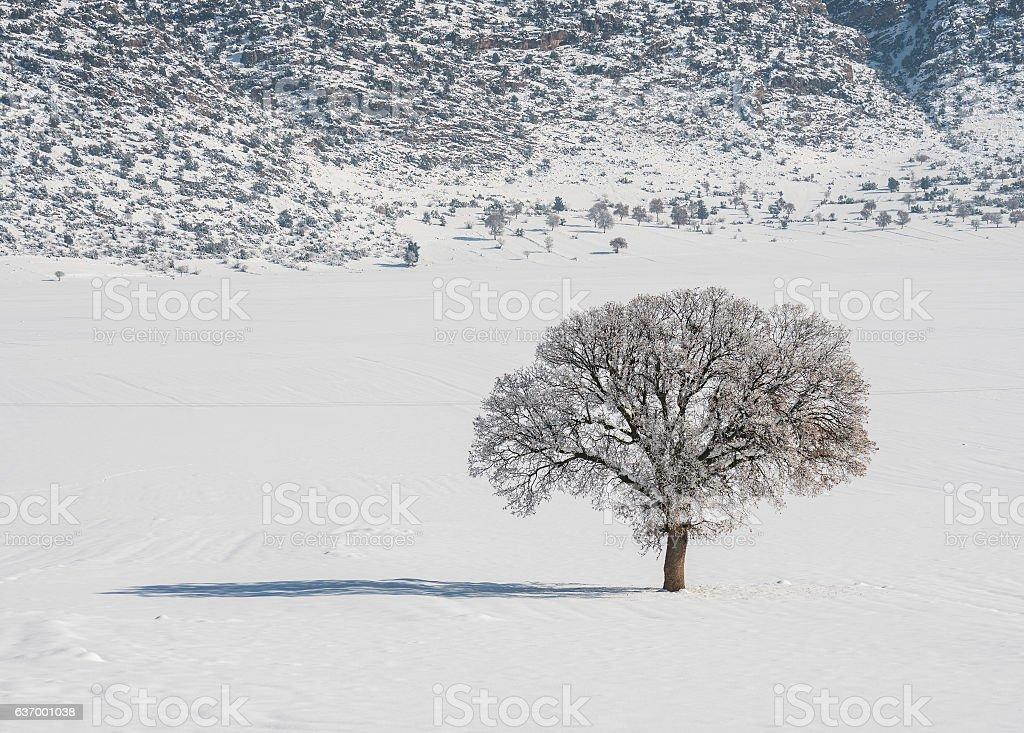 Bare Tree in Snowy Field stock photo