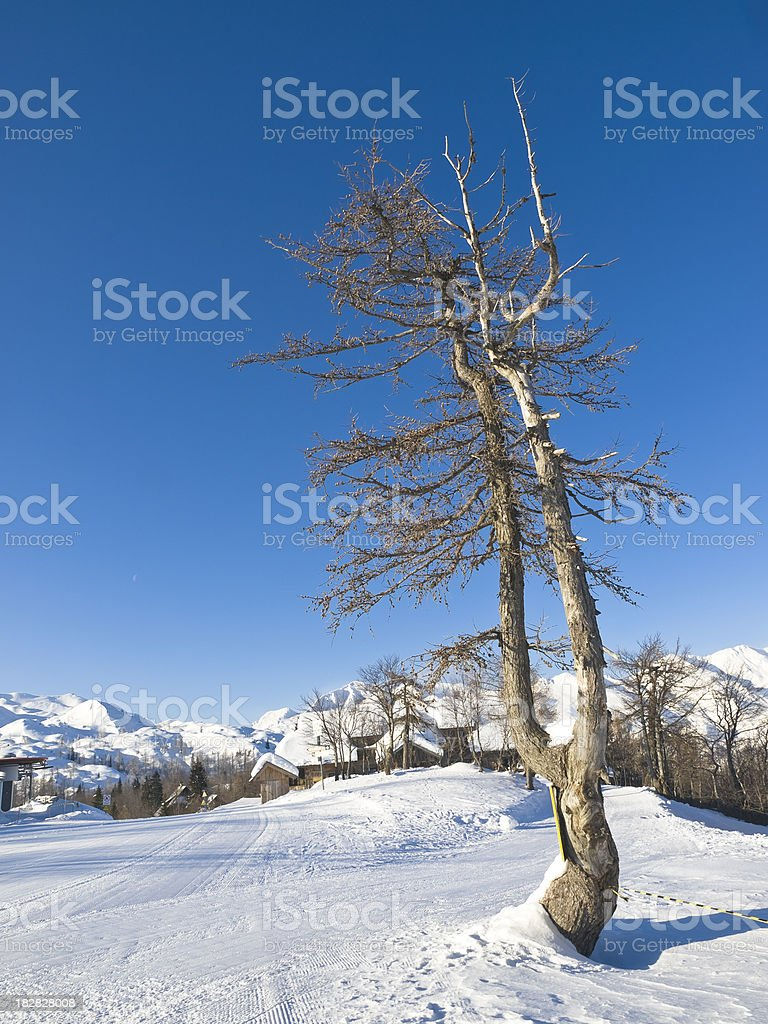 Bare tree in winter royalty-free stock photo