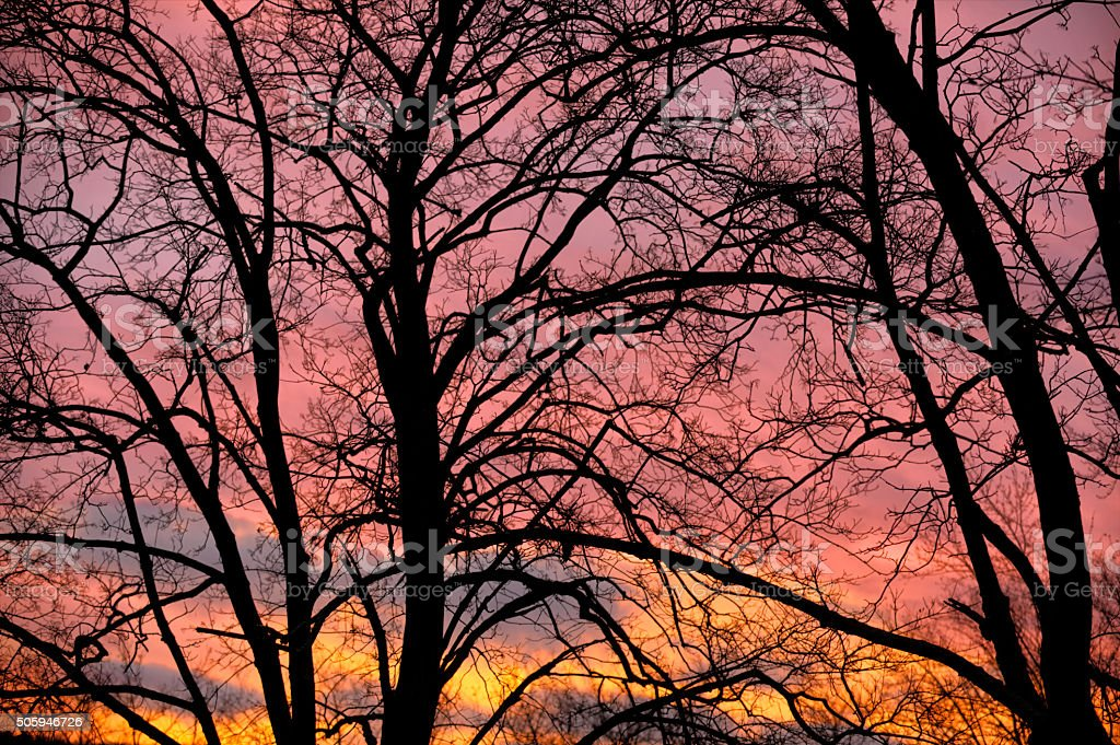 Bare Tree Limbs Silhouetted Against Early Dawn Sky stock photo