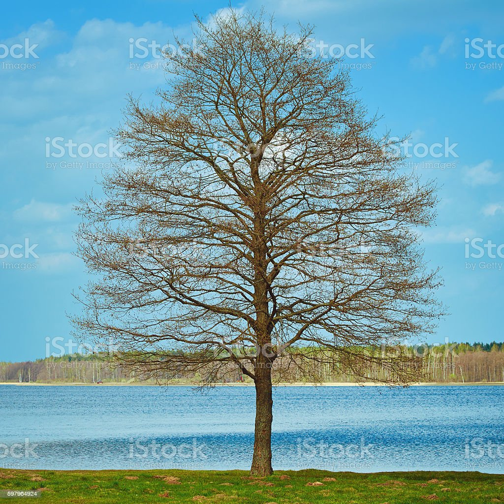 Bare Tree on the Bank stock photo