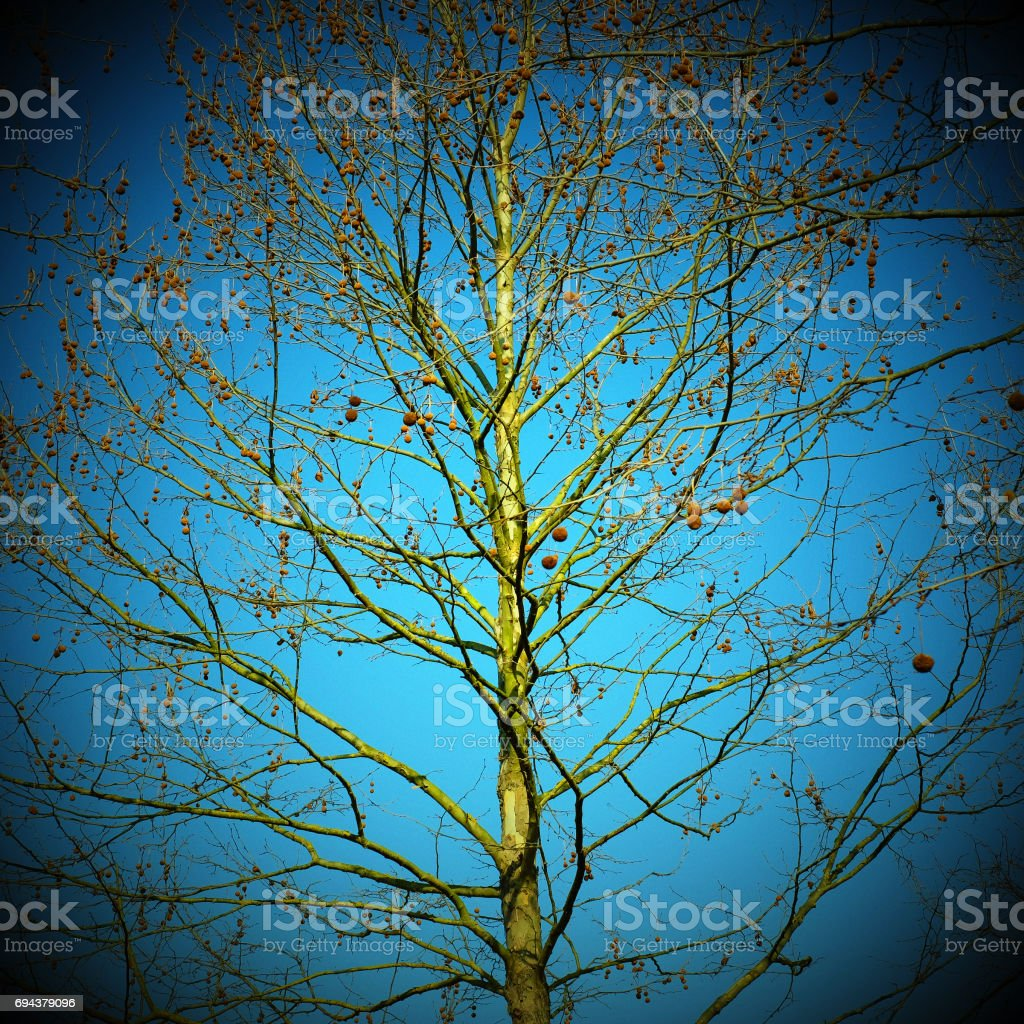 Bare tree photographed against clear sky with aged effect stock photo