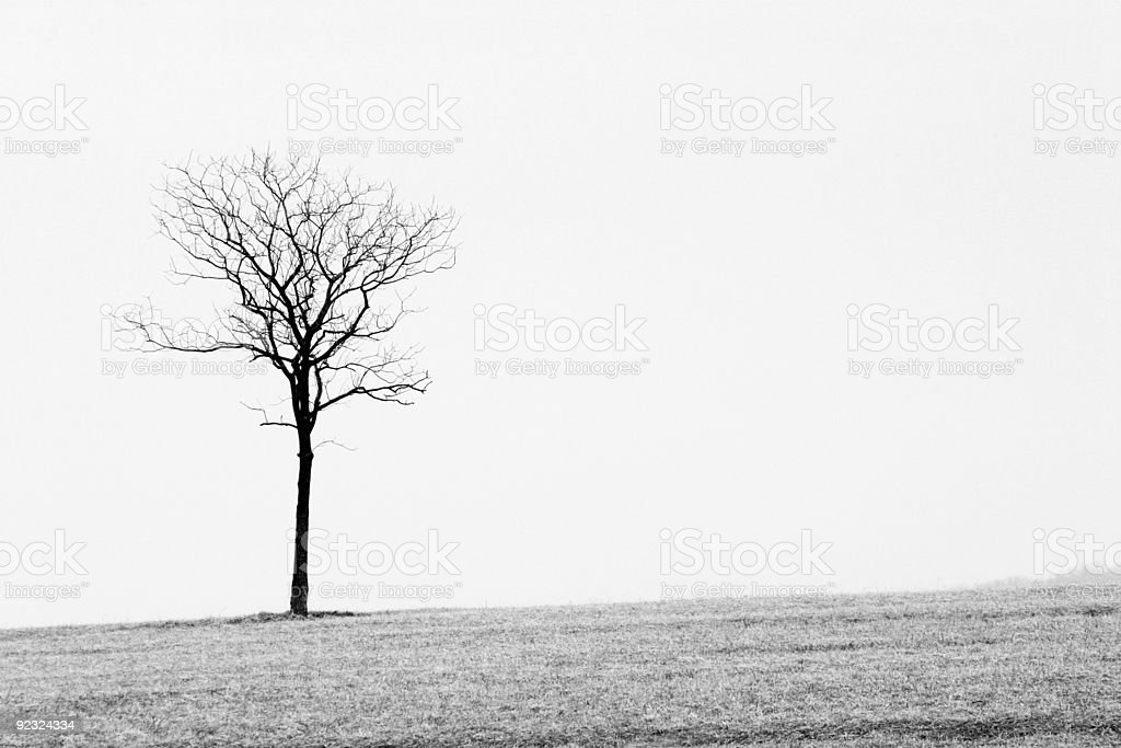 Bare Tree royalty-free stock photo