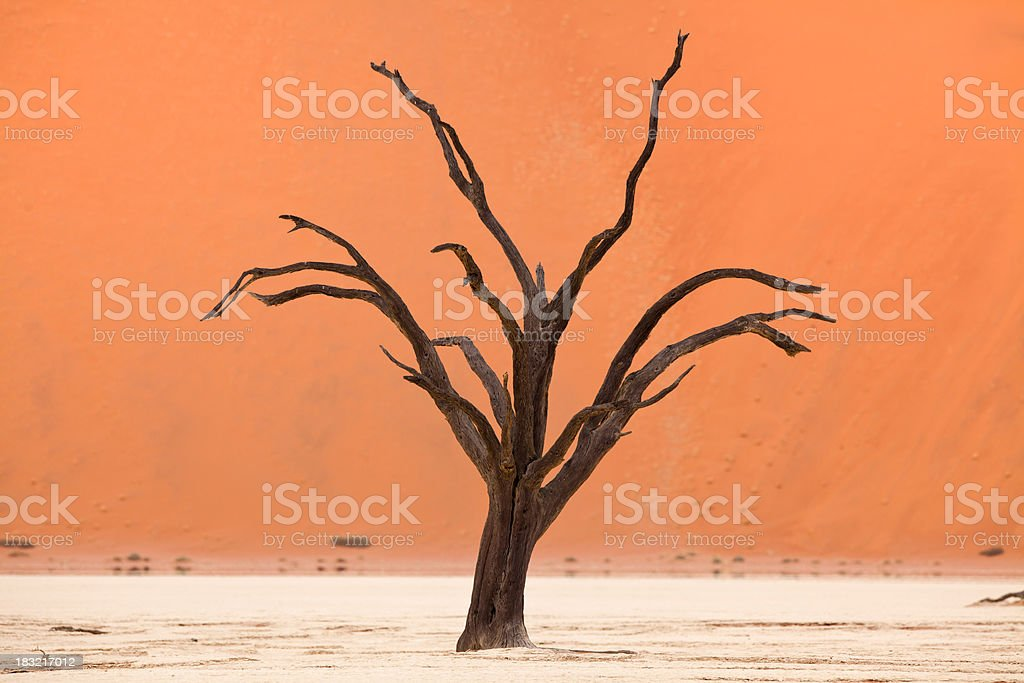Bare trees at Dead Vlei, Namibia royalty-free stock photo