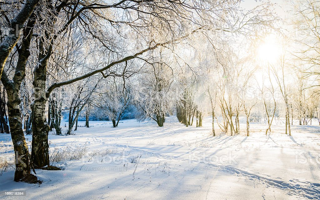 Bare trees in a forest in sunny winter stock photo