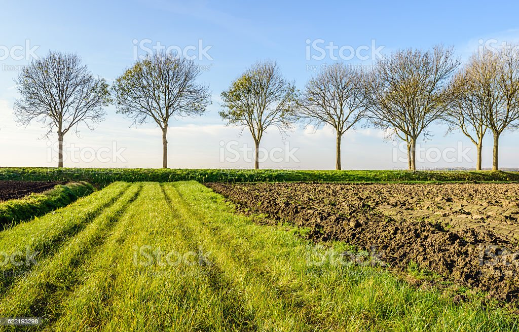 Bare trees in a row against the blue sky stock photo