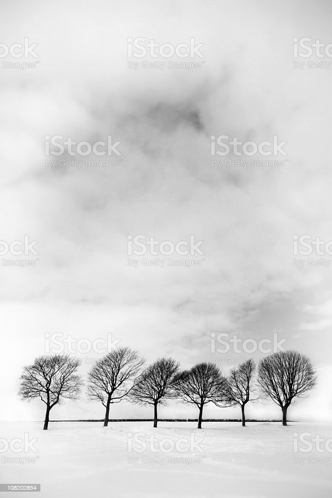 Bare Trees in Field of Snow, Black and White stock photo