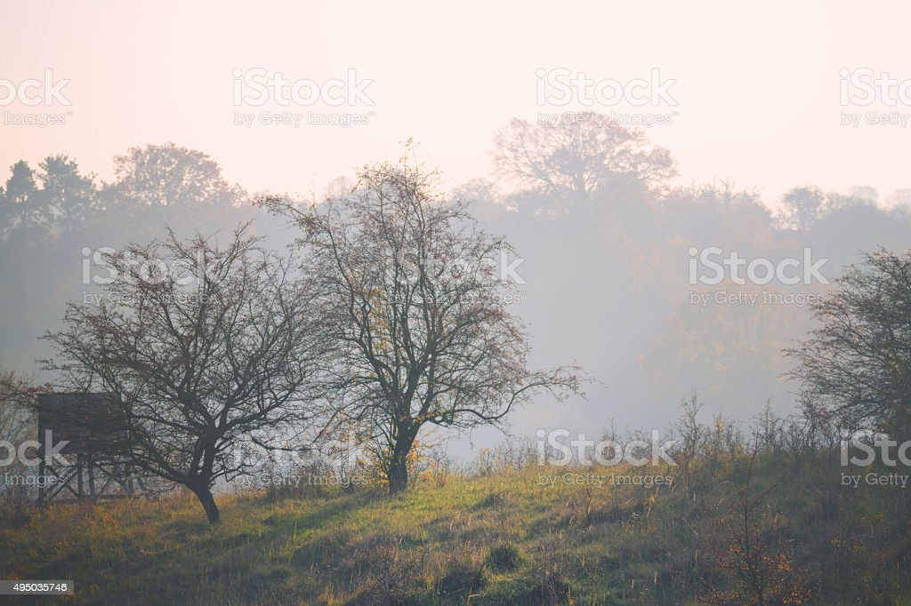 Bare trees in fog stock photo