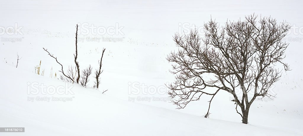Bare trees in winter royalty-free stock photo