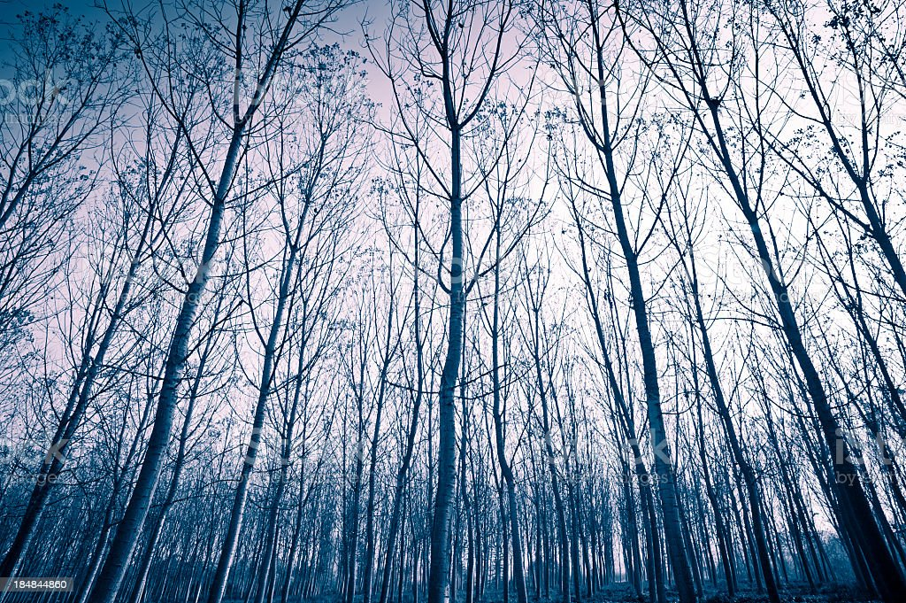 Bare Trees In Winter, Piedmont, Italy royalty-free stock photo