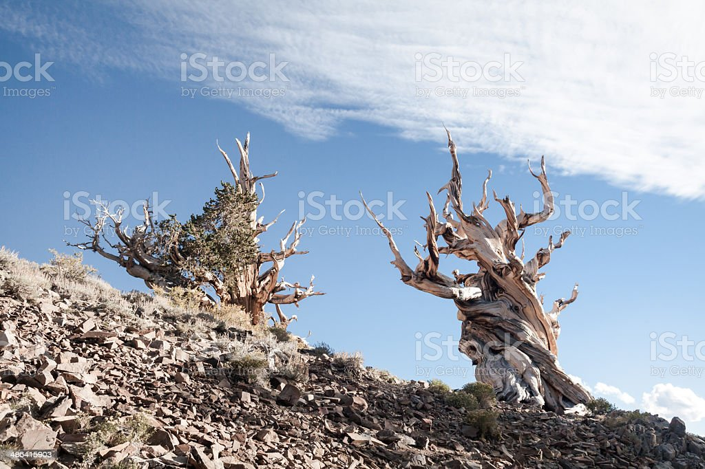 Bare Trees on Mountain Slope stock photo