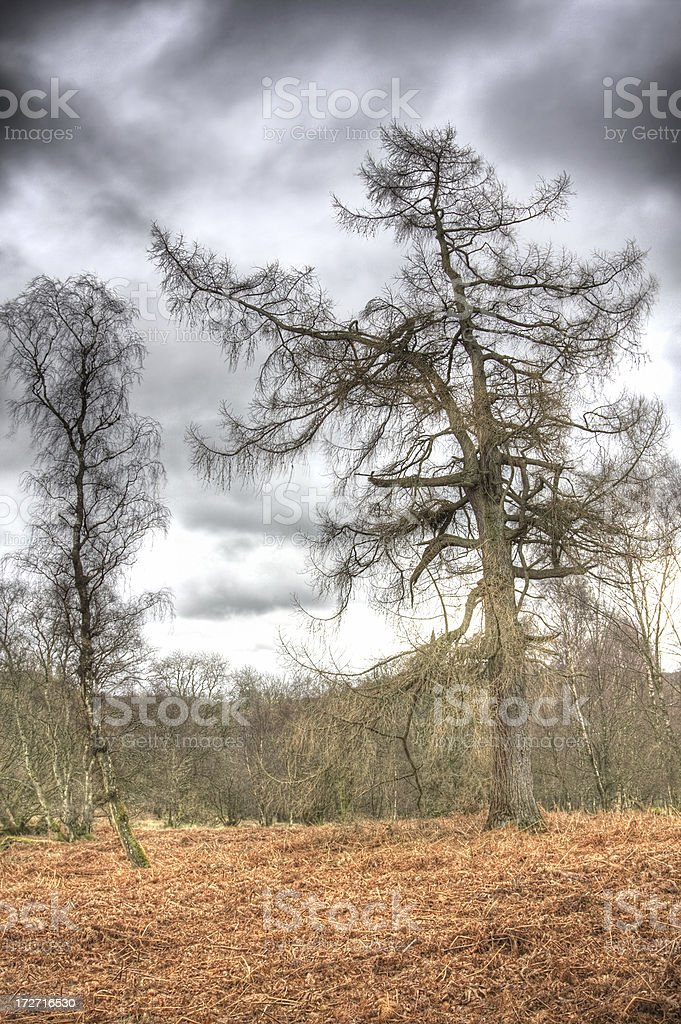 Bare trees royalty-free stock photo