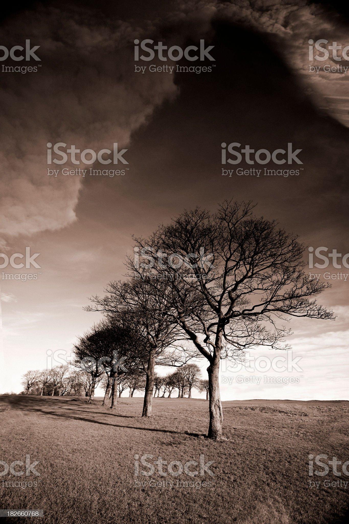 Bare Trees royalty-free stock photo