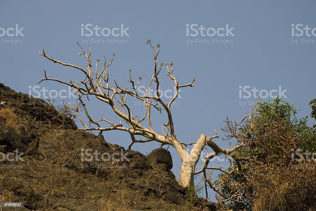 Bare white tree, bathed in morning sunlight royalty-free stock photo