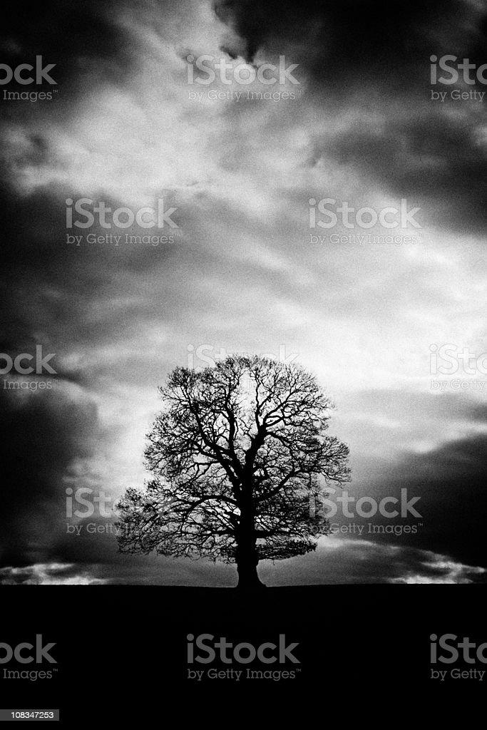 Bare winter tree royalty-free stock photo