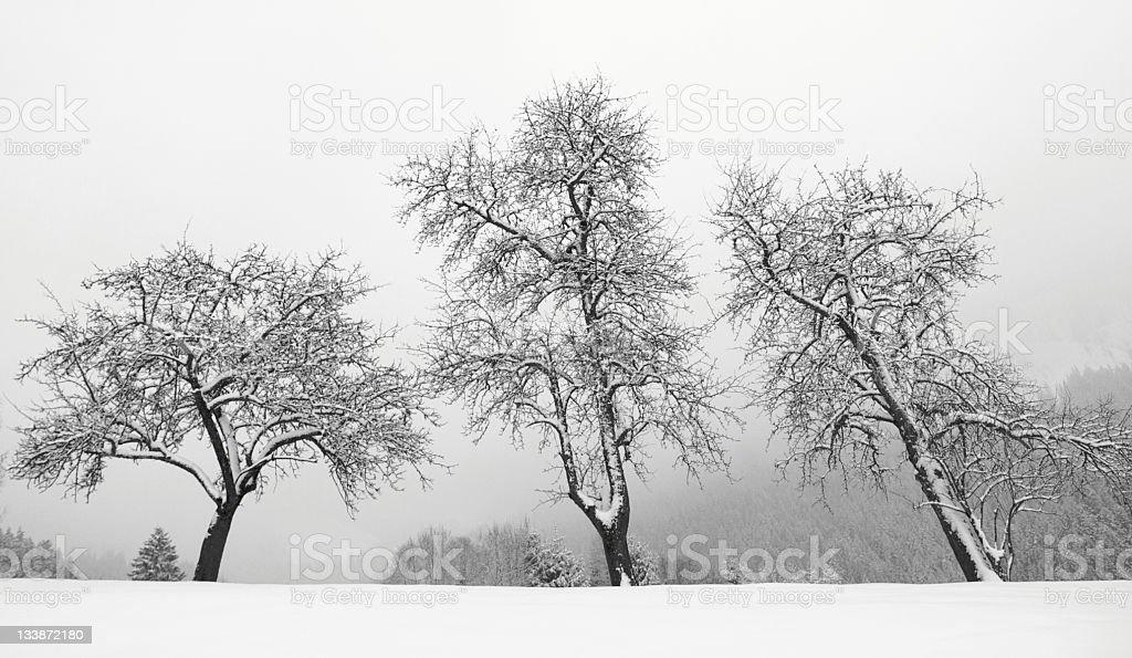 Bare winter trees royalty-free stock photo