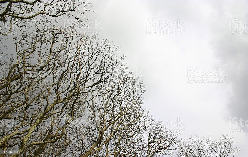 bare woodland canopy with copyspace royalty-free stock photo