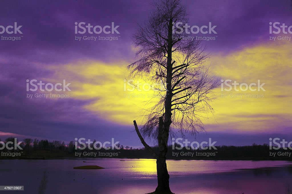 bare-branched birch tree at sunset royalty-free stock photo