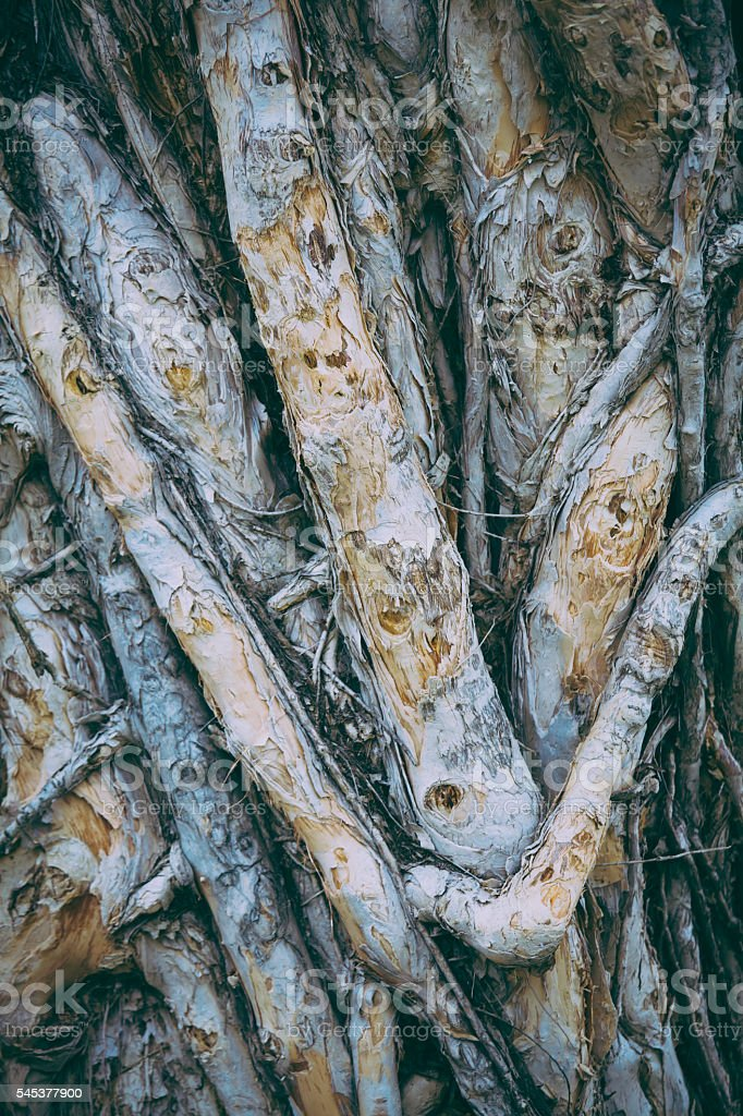 Bared tree roots stock photo