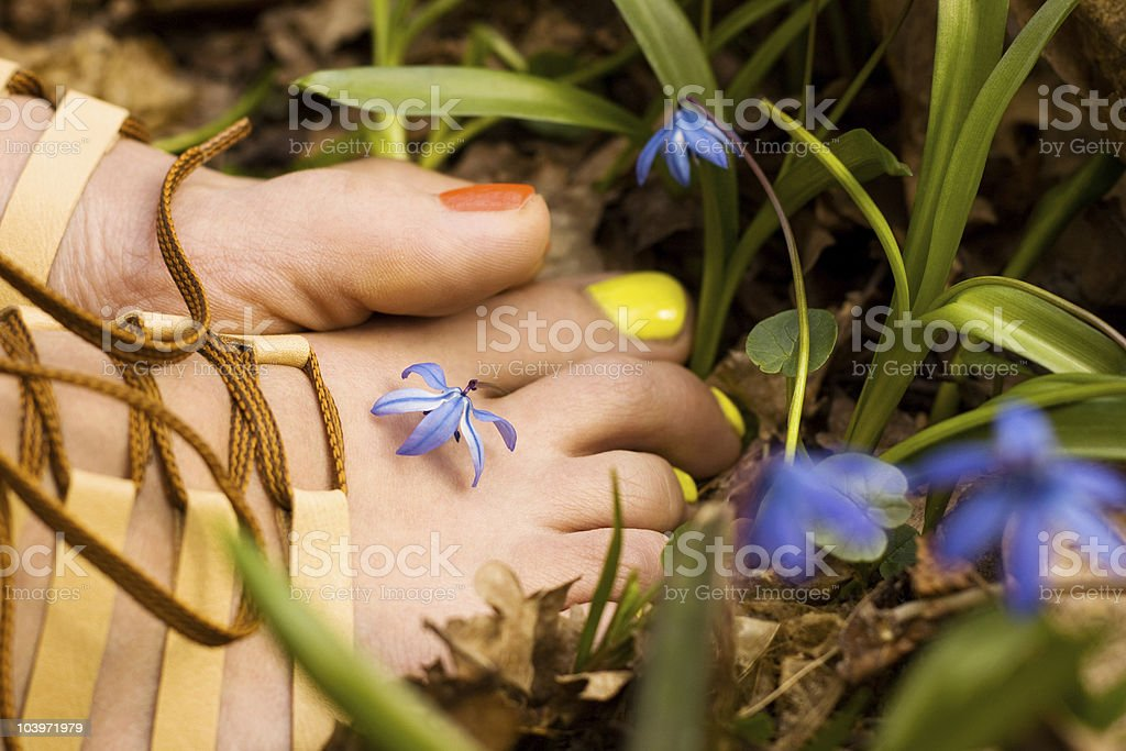 Barefooted tender woman's feet in snowdrops. Footwear concept stock photo