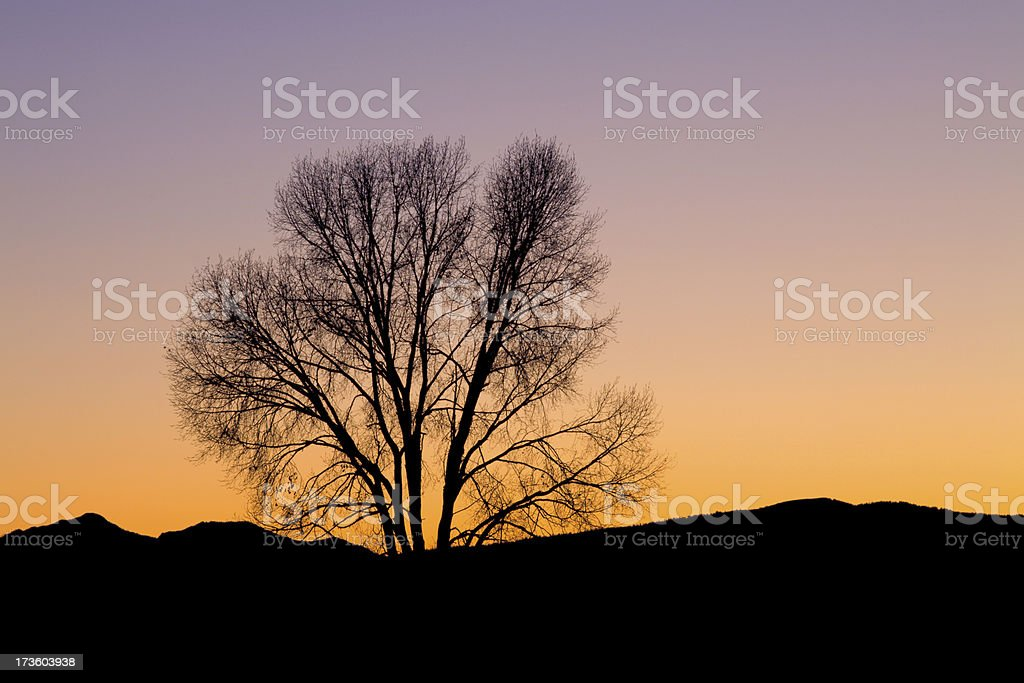 Baren tree Silhouette Against Sunset Winter Sky royalty-free stock photo