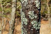 Bark and the lichen