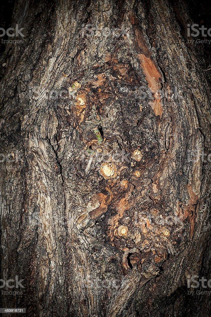 bark background royalty-free stock photo