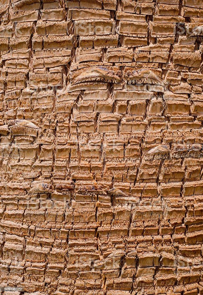 Bark background texture stock photo