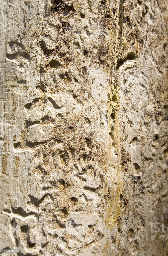 Bark Beetle Damage stock photo