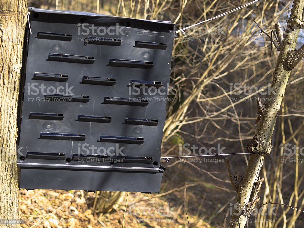 Bark beetle trap royalty-free stock photo