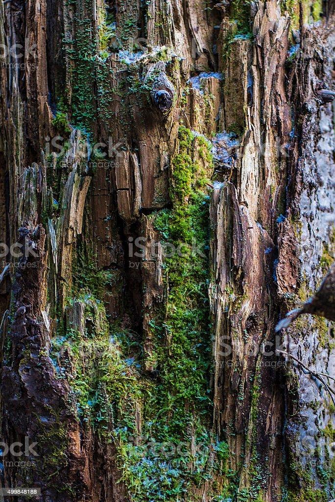 Bark cliff royalty-free stock photo