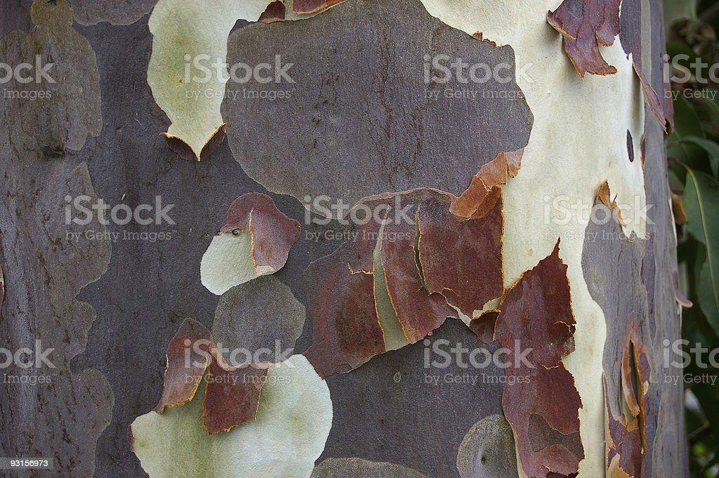 Bark detail royalty-free stock photo