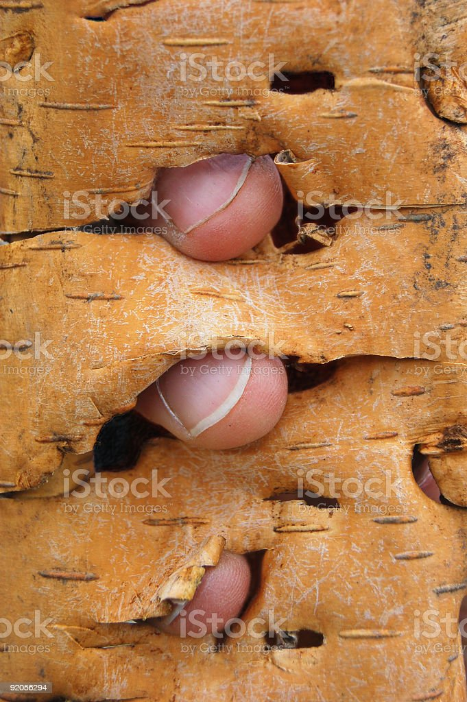 Bark fingers stock photo