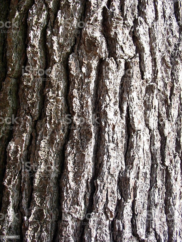 Bark - Macro Tree royalty-free stock photo