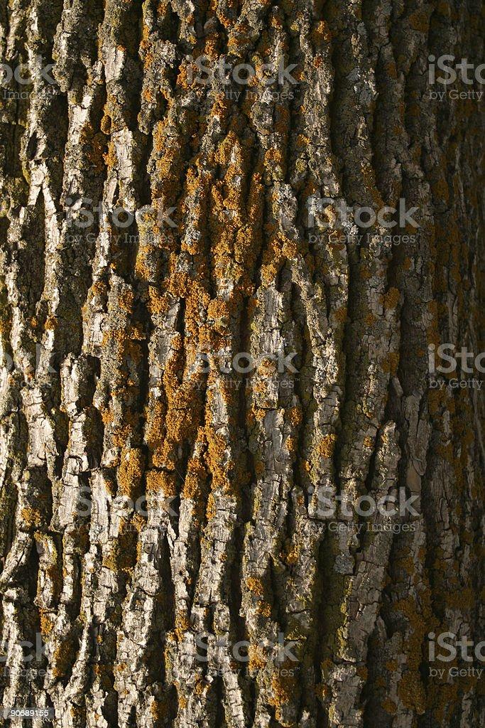 Bark  Moss Texture royalty-free stock photo
