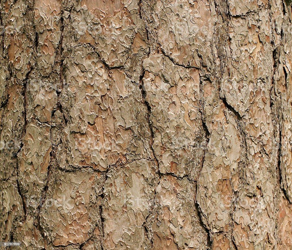 bark of a pine stock photo