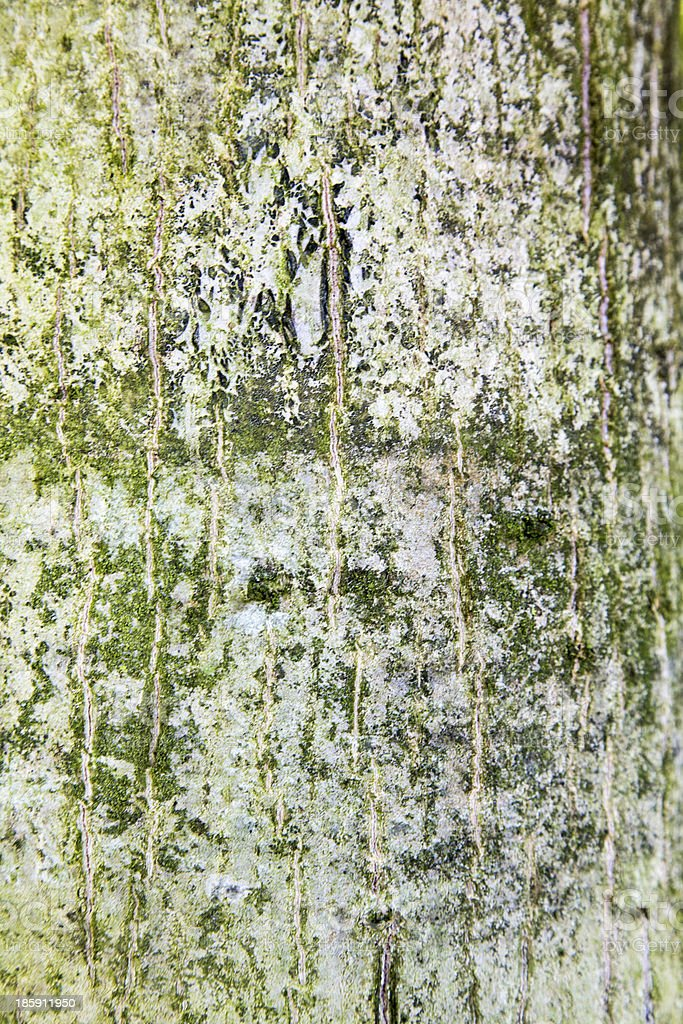 Bark of a tree stock photo