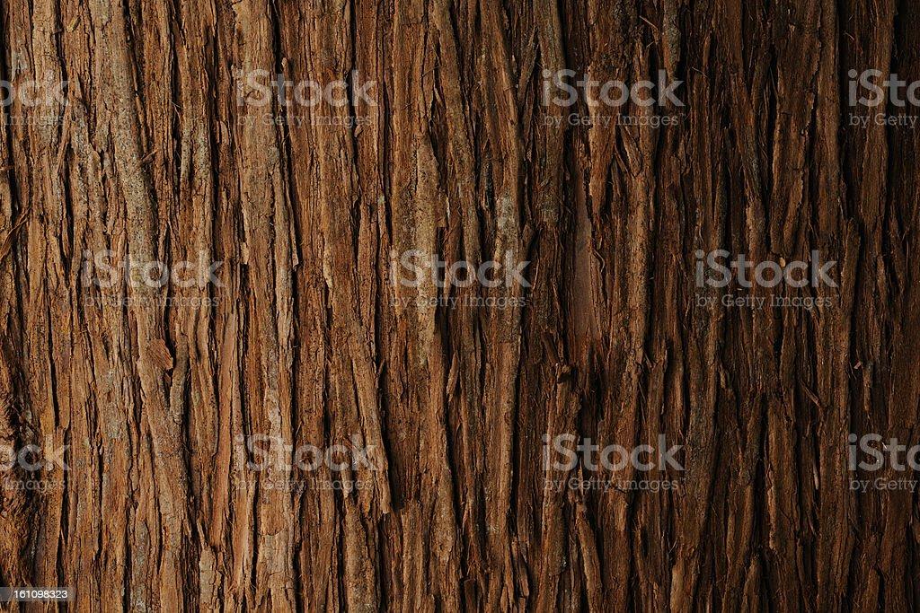 Bark of cedar tree texture background royalty-free stock photo