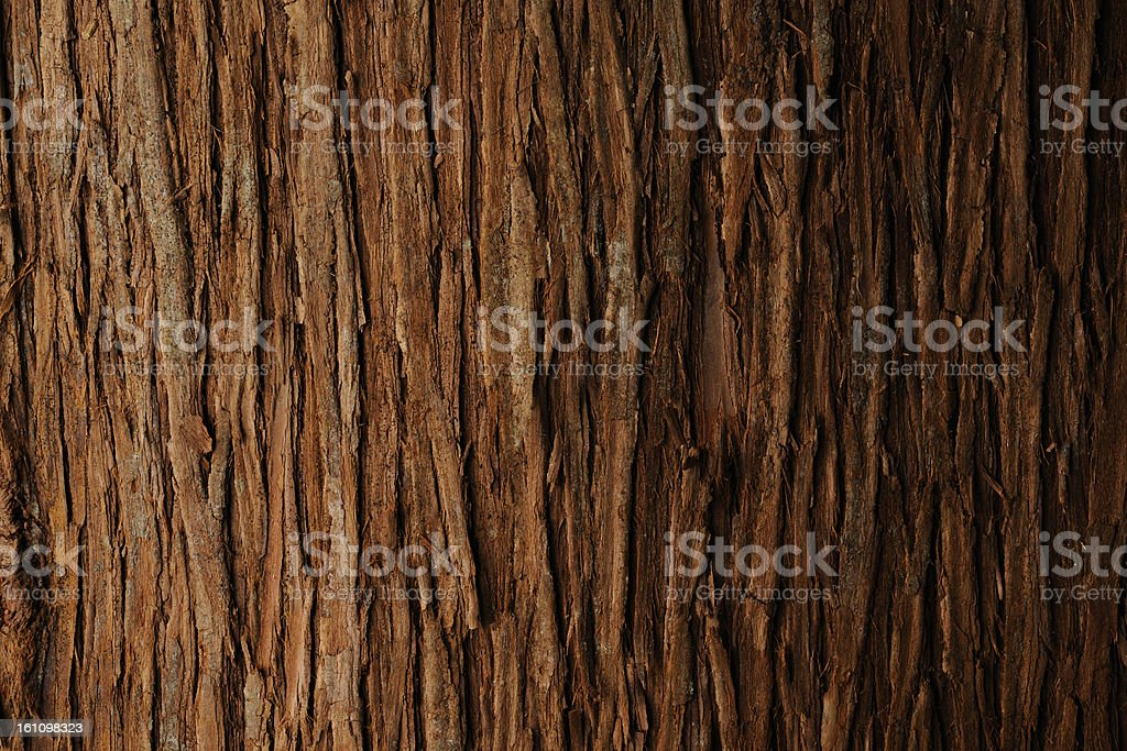 Bark of cedar tree texture background stock photo