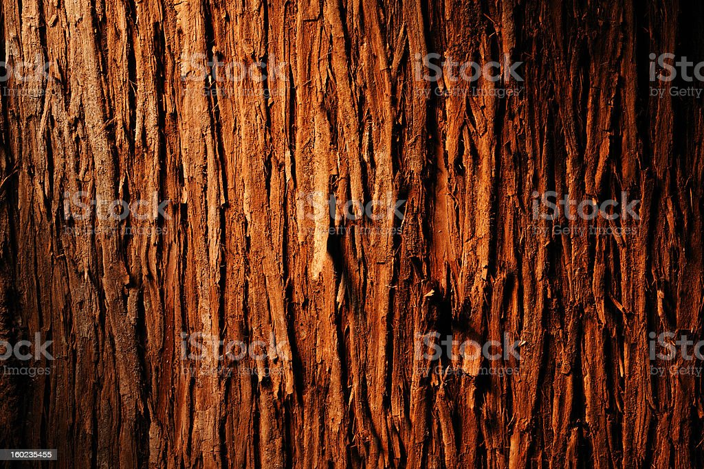Bark of cedar tree textured background stock photo