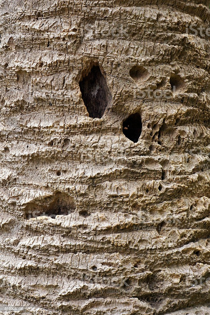 Bark of old palm tree. stock photo