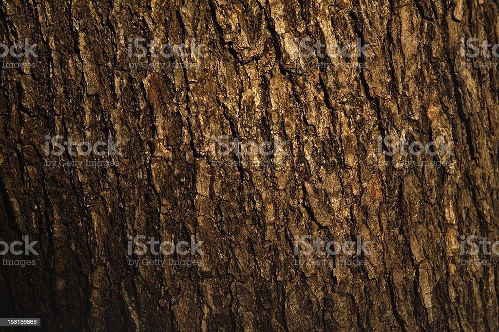 Bark of pine tree texture background stock photo