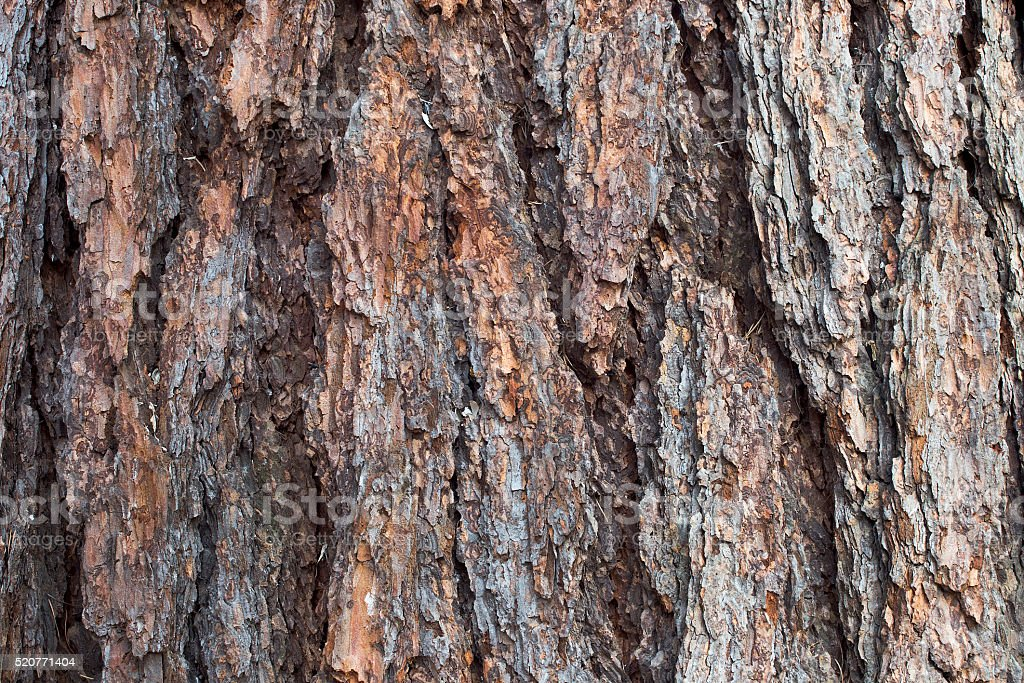 bark of trees stock photo