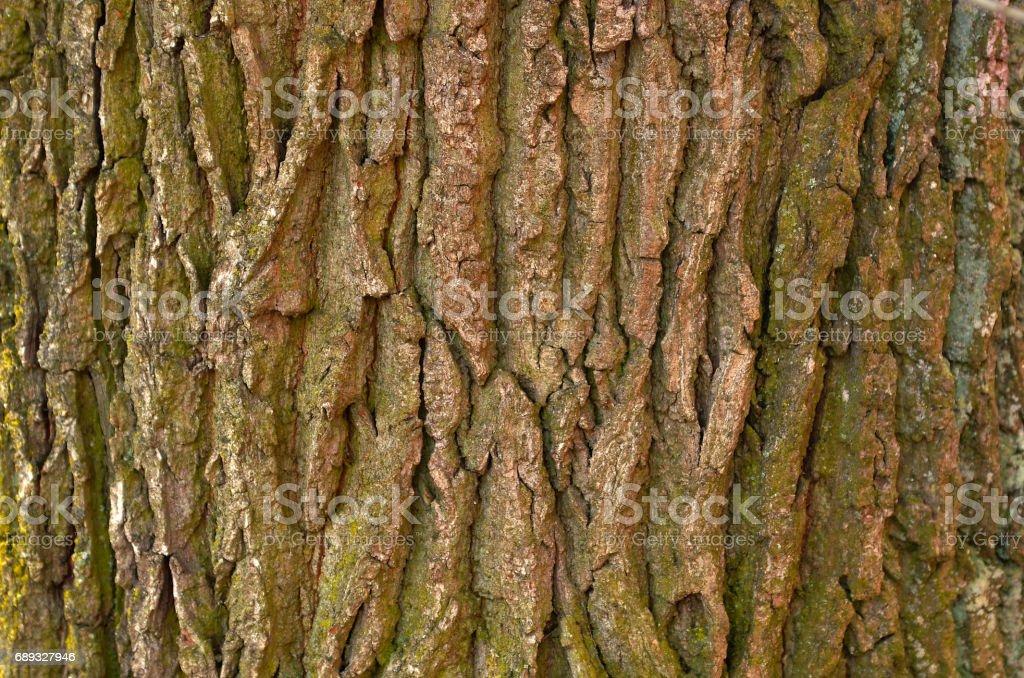 Bark old tree. wood texture stock photo